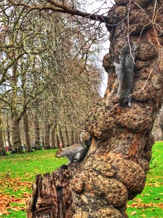 squirrel feeding london st james park